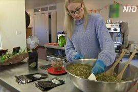 17-річна австралійка заснувала компанію з виробництва трав'яних чаїв
