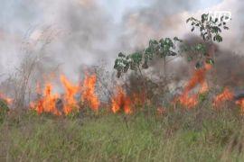 Пожежі в джунглях загрожують фермерам у Бразилії