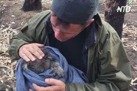 Дрон з інфрачервоними камерами дає надію на порятунок коал в Австралії