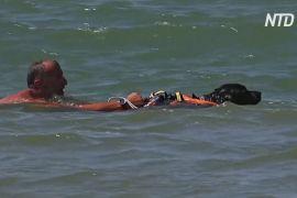В Італії з рятувальниками на пляжах працюють собаки
