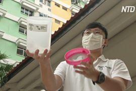 Заражені комарі мають врятувати сінгапурців від лихоманки денге