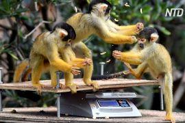 У Лондонському зоопарку проводять щорічне зважування тварин
