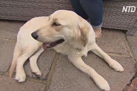 Закінчення карантину спричиняє стрес у домашніх собак