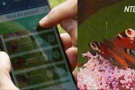 Британські захисники природи стежать за метеликами за допомогою зоологів-любителів