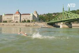 Сотні будапештців перепливли швидкий Дунай