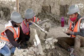 На місці майбутнього аеропорту в Мексиці відкопали 100 скелетів мамонтів