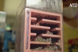Перший у Сінгапурі магазин мурах процвітає