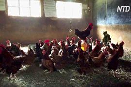 У Кенії через пандемію школи перетворюються на ферми