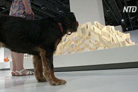 Архітектуру для собак показали на виставці в Лондоні