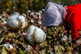 США припиняють імпорт помідорів і бавовни з китайського регіону Сіньцзян