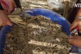 Йорданки виготовляють із листя унікальний папір