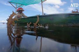 На Балі немає туристів — місцеві жителі знову почали вирощувати водорості