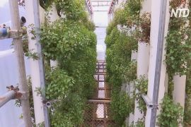 Ферма й ставок у вантажних контейнерах: екобізнес у Гонконзі
