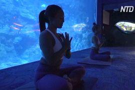Злитися з підводним світом: у Гонконзі займаються йогою в океанаріумі