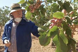 Фісташки на батьківщині Дон Кіхота: нова сільгоспкультура проти безробіття