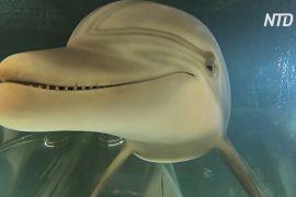 Чи зможе робот замінити дельфінів у парках розваг?