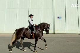У Севільї пройшла знаменита виставка андалузьких коней