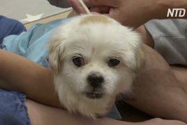 Ветеринарна швидка допомога: як у Гонконзі допомагають кішкам і собакам