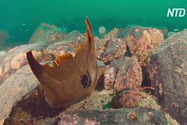 Біля берегів Шотландії знайшли понад 100 яєць рідкісних плахурів гладеньких