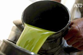 Хорватія прагне стати лідером із виробництва оливкової олії