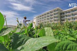 Кубинські готелі приваблюють туристів органічною продукцією