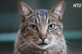 Котячий притулок у Барселоні через пандемію переповнений старими котами