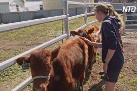 Тварини на фермі вчать дітей виробництва їжі та економіки