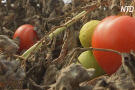 Смачний суп із непоказних овочів: волонтери в Косові рятують харчі
