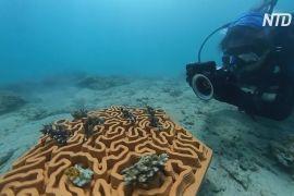 Глиняні плитки рятують корали від зникнення