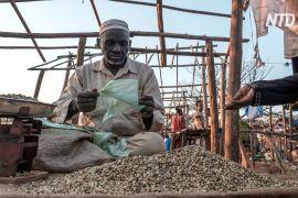 Каву з ефіопських пагорбів продають у вищому світі Лондона