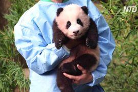 Першому в Південній Кореї дитинчаті панди дали ім'я