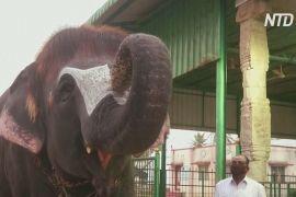 Слониха з індійського храму завдяки модній зачісці стала зіркою інтернету