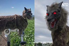 У Японії ведмедів від людських жител відганяє робот-вовк