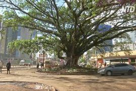 Президент Кенії врятував столітнє дерево