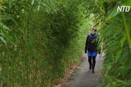 «Сади світу» в Берліні пропонують здійснити кругосвітню подорож