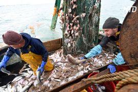 Квоти на вилов риби — один із каменів спотикання в торговельних відносинах після «брекзиту»