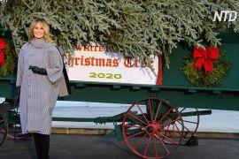 Перша леді США прийняла різдвяну ялину біля ґанку Білого дому