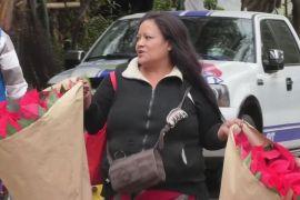 У Мексиці буйно квітнуть передвісники Різдва