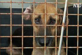У Колумбії зоозахисники допомагають собакам, які постраждали під час урагану «Йота»