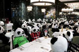 Відбиток пандемії: у німецькому ресторані всі столики зайняли плюшеві панди
