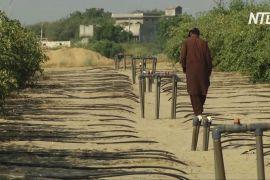 Пакистанські фермери відкривають для себе ефективність крапельного зрошення