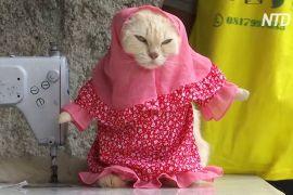 Пухнаста мода: індонезієць шиє кумедні наряди для кішок