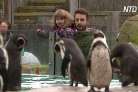 Лондонський зоопарк знову відкрився після карантину