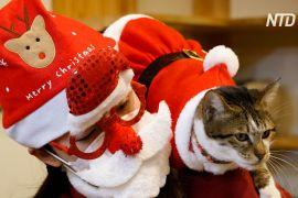 Коти в костюмах Санти дарують різдвяний настрій гостям кафе в Сеулі