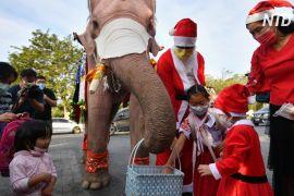 Подарунок на Різдво: слони роздали тайським дітям захисні маски