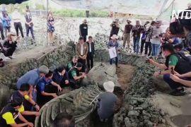 Тайські археологи знайшли скелет кита віком 5000 років