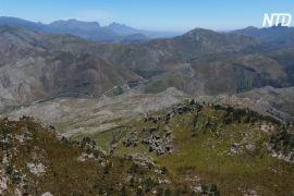 У ПАР вирубують чужорідні дерева, що відбирають воду в Кейптауна