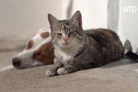 Собака в грецькому селі годує молоком котів
