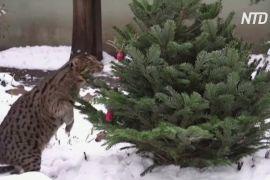 Як мешканці Талліннського зоопарку насолоджуються зимовою погодою