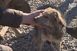 Безпритульним собакам Косова знаходять господарів у ЄС та США